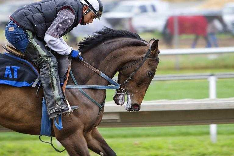 ochraniacze dla konia