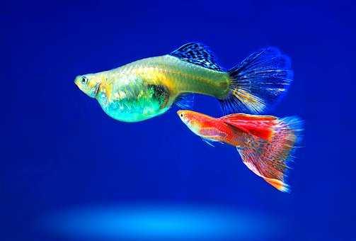 filtry wewnętrzne do akwarium